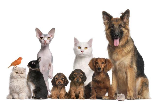 Quieres cuidar a tu mascota, aquí van 5 tips importantes