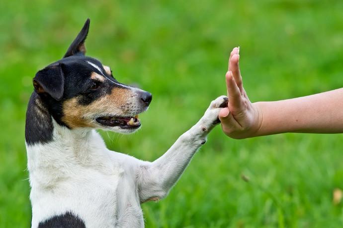 ejercitacion de perros