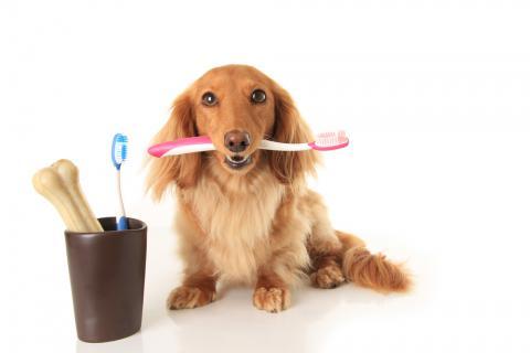 salud dental de tu mascota