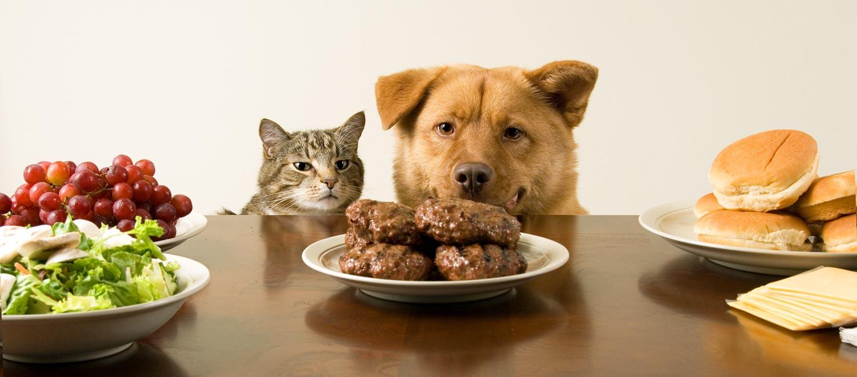 alimentacion canina