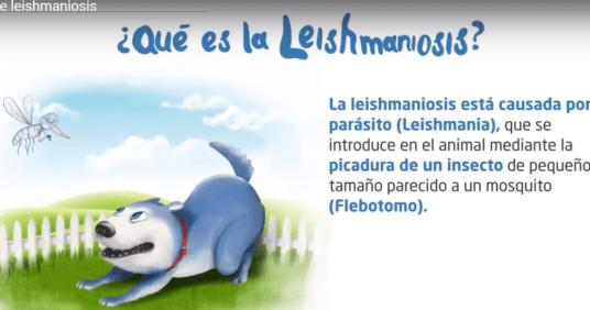 Leishmaniosis Prevention