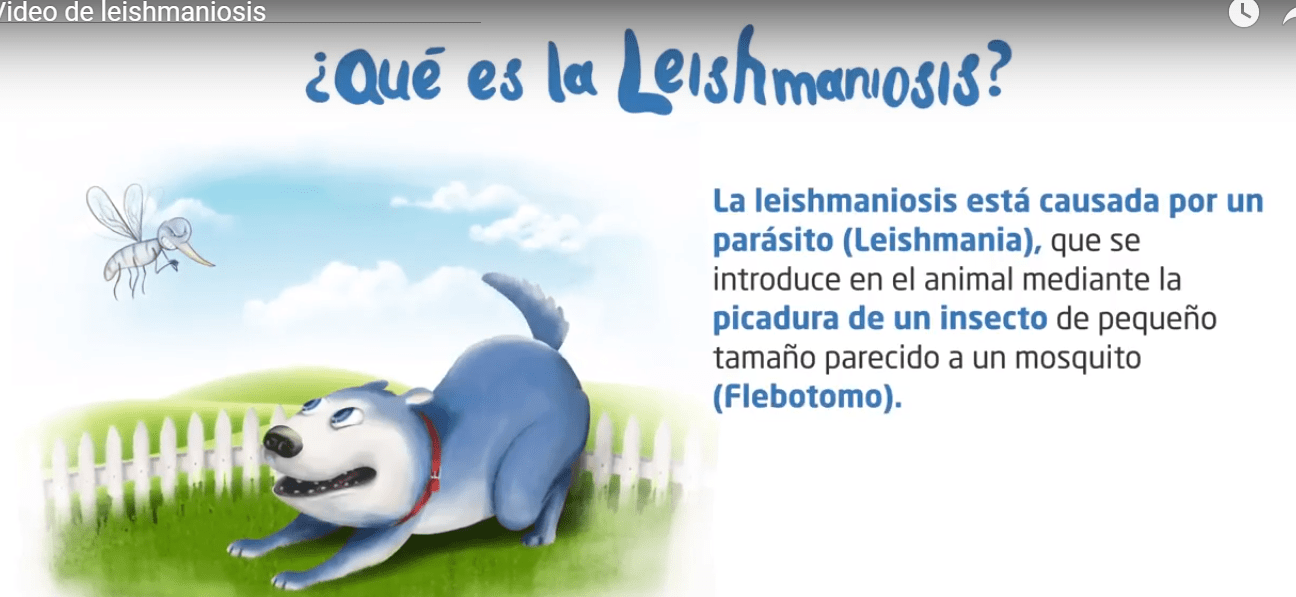 Leishmaniosis Prevention