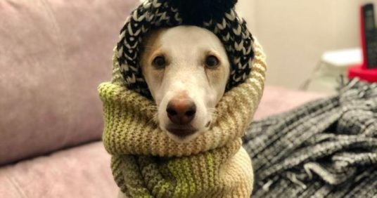Campaña de vacunación de tos de las perreras