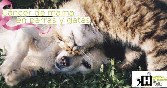 El cáncer de mama también afecta a nuestras mascotas