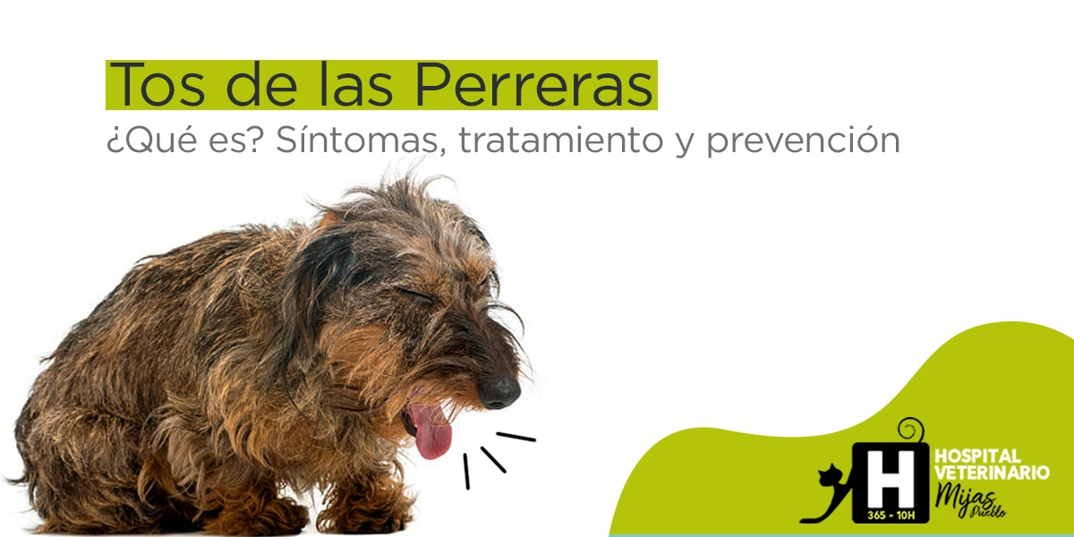 Traqueobronquitis Infecciosa: Tos de la Perreras