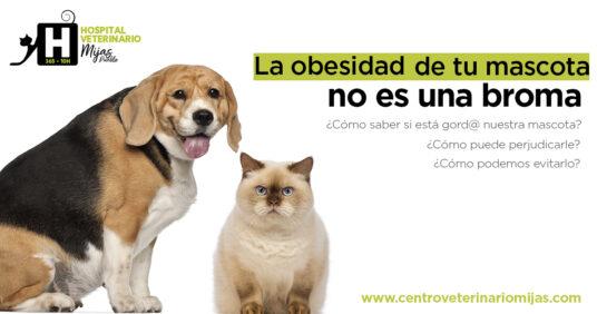 Los problemas de la obesidad en mascotas