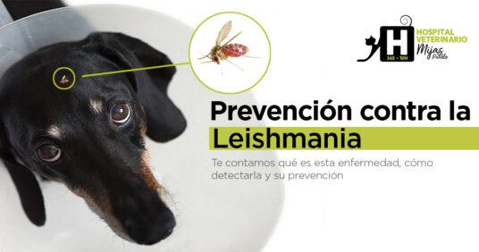 Protégele a tiempo de la Leishmanía
