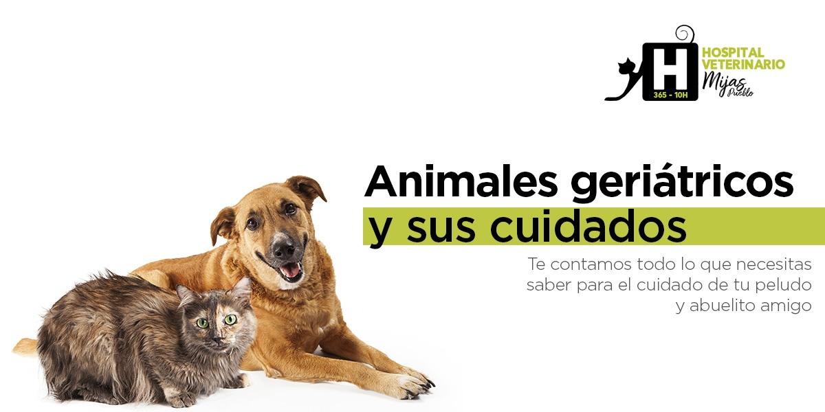 Animales geriátricos: la importancia de una detección precoz en la vejez