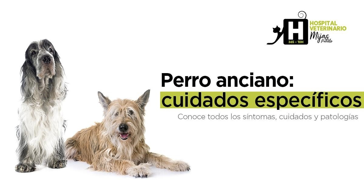 Guía completa de cuidados del perro mayor