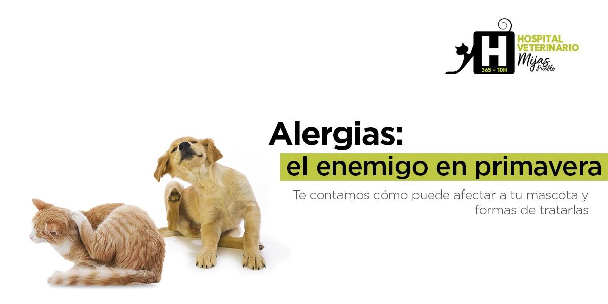 Cómo las alergias estacionales afectan a nuestras mascotas