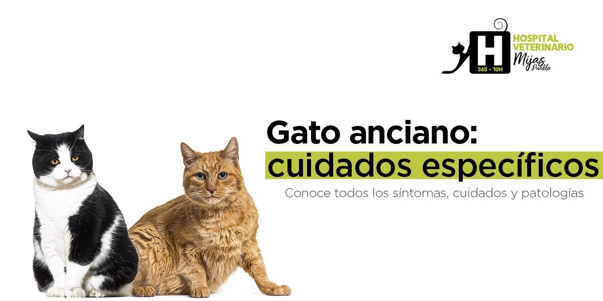 Gato/a senior: Guía completa para sus cuidados