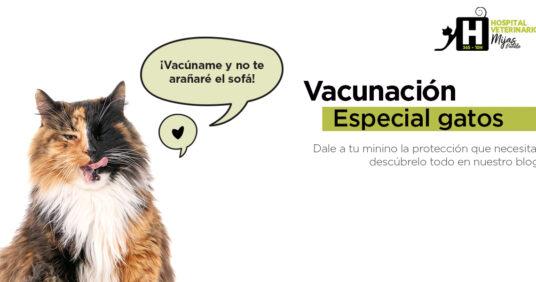 IMPORTANCIA VACUNACIÓN GATOS